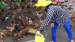 TP.HCM: Để xảy ra cúm H5N1, chủ tịch huyện sẽ phải chịu trách nhiệm