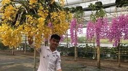 """Giàn phong lan giả hạc thanh củi """"khủng"""" của 9X Lâm Đồng"""