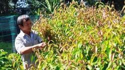 Nói chơi mà thiệt: Mang rau rừng trồng trong vườn, thành triệu phú