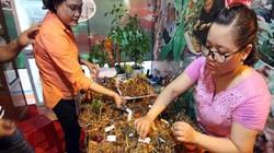 Quảng Nam: Đầu năm mới, nông dân đút túi 2,7 tỷ tiền bán sâm