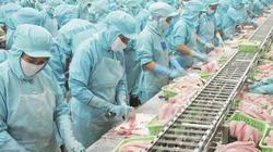 Dịch virus Corona: Doanh nghiệp xuất khẩu cá tra sang Trung Quốc vẫn lạc quan