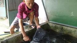 """TP.HCM: Những làng mai, làng cá có nhiều nông dân """"1 tỷ đồng"""""""