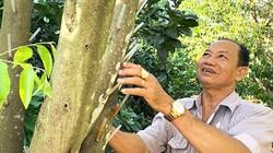 """Trồng loài cây chế ra thứ dầu thơm """"điếc mũi"""", cứ 1ml bán giá 1 triệu"""
