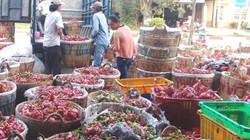 Corona: Tiền Giang kêu gọi người dân mua 20.000 tấn thanh long tồn