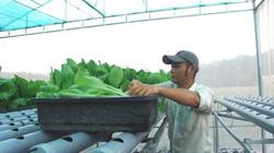 TP.HCM thí điểm xây dựng công trình phụ trên đất nông nghiệp