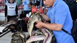 Ám ảnh bởi Corona, chợ chuyên bán động vật hoang dã dừng buôn rắn, bán dơi