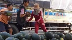Giá dưa hấu Tây Nguyên tăng gấp 2, 1 ngày bán 7 tấn cho dân