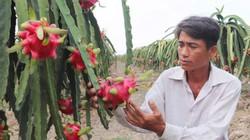 Từ dầu thô đến nông sản đều rớt giá thảm vì...Corona