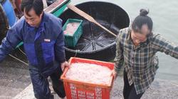 """Clip: Sau Tết, ngư dân Hà Tĩnh có tiền triệu/ngày nhờ """"lộc biển"""""""