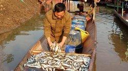 Ở Quỳnh Nhai loại cá trước rẻ mạt nay bắt phơi khô thành đặc sản