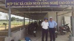 Nuôi bò 3B - hướng đi mới của nông dân xứ Quảng