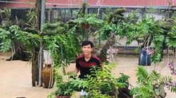 """Vườn lan rừng """"khủng"""" của 9X Quảng Nam, có 10.000 giò giả hạc"""