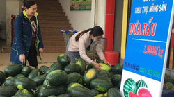 Hội NDVN giúp nông dân Gia Lai tiêu thụ 383 tấn dưa hấu