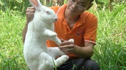 Bí quyết làm giàu từ nuôi thỏ nhập ngoại New Zealand