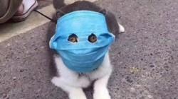 Cạn lời với những kiểu bảo vệ thú cưng giữa tâm dịch viêm phổi cấp