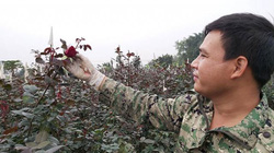 """Mai là Lễ tình nhân, nay người trồng hoa hồng đã  """"héo"""" vì corona"""