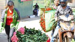 Virus corona khiến giá hoa hồng Đà Lạt chỉ còn 2.000 đồng/bông