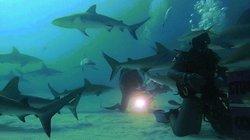 """""""Rùng mình"""" cảnh thợ lặn bị đàn cá mập 50 con bủa vây"""