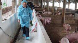 Đẩy mạnh tái đàn lợn, không lơ là dịch bệnh