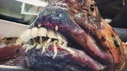 Ảnh: Bộ sưu tập sinh vật biển kỳ dị không dành cho người yếu tim
