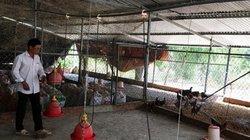 Khánh Hòa tiêu hủy hàng ngàn con gà do cúm A/H5N6, nhiều con to 2kg