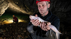 Sống ở hang động, loài cá này gần như mù dài 1,5m thân trắng toát