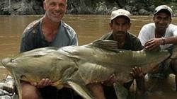 Nín thở xem cần thủ Anh 'vật lộn' cụ cá chiên khổng lồ gần 100kg