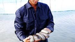 70 nước ăn hải sâm, nhưng nuôi giỏi nhất thế giới là 1 người Việt