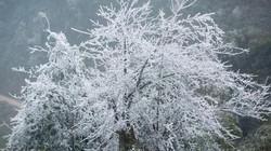 Miền Bắc trời rét đậm, vùng núi có nơi rét hại dưới 5 độ C