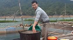 Lênh đênh trên hồ, nuôi cá đặc sản, có cả cá thần, dân khấm khá