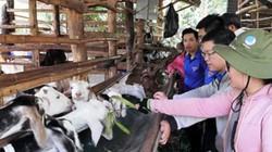 Đồng Nai: Lãi cả trăm triệu/tháng, nhà nông rủ nhau nuôi dê thịt