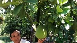 Hỗ trợ kỹ thuật, hướng nghiệp tốt, nông dân dễ tăng thu nhập