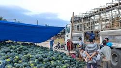 Dưa hấu Bình Định giá 3.000 đồng/kg, xe tải khuân sạch gần 200 tấn