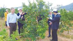 Phân bón Lâm Thao giúp nông dân bội thu từ các mô hình trình diễn