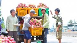 """Trung Quốc """"vét sạch"""" thanh long, giá tăng vụt thêm 15.000 đồng/kg"""