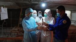 """Ảnh: Bộ trưởng NN&PTNT thăm trại """"miễn nhiễm"""" dịch tả lợn châu Phi"""