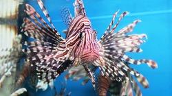 Đệ nhất cá cảnh biển: Chuyện thú vị không phải ai cũng biết