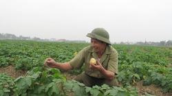 100% hàng nông sản được miễn thuế xuất khẩu