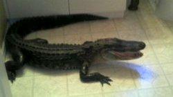 """Thất kinh thấy cá sấu """"dạo chơi"""" trong khách sạn"""