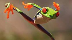 Cá vàng giống... ếch và trùm phát xít Hitler