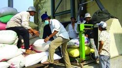 Nhiều doanh nghiệp hoàn thành chỉ tiêu mua lúa