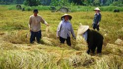 Xuất khẩu nông sản: Tập trung sản xuất 4 mặt hàng chủ lực