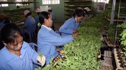 Trang trại làm giàu từ rau VietGAP