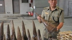 Buôn lậu sừng tê giác, người gốc Việt bị bắt
