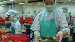 Hàng loạt doanh nghiệp thủy sản phá sản: Hệ lụy từ đói nguyên liệu