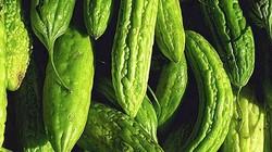 Tạm dừng kiểm dịch 5 mặt hàng rau quả xuất khẩu