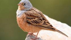 Cứu sống chim hấp hối nhờ nghe nhạc từ iPhone
