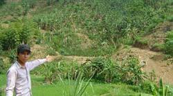 Dân ồ ạt  phá rừng trồng chuối