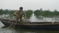 """Quảng Trị: Nông dân lập """"vành đai xanh"""""""