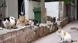 Bỏ chồng để được sống với... 550 con mèo